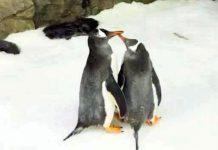 Pingüinos gays