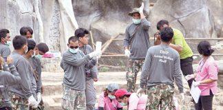 Mueren 86 tigres confiscados a templo