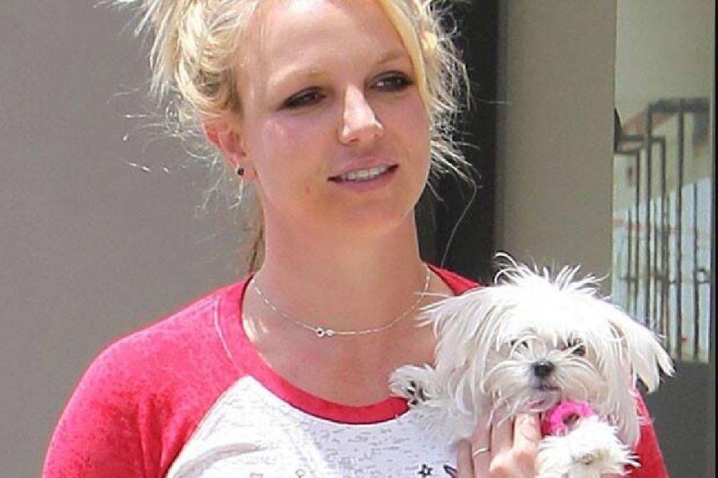 Britney Spears es acusada de maltrato animal