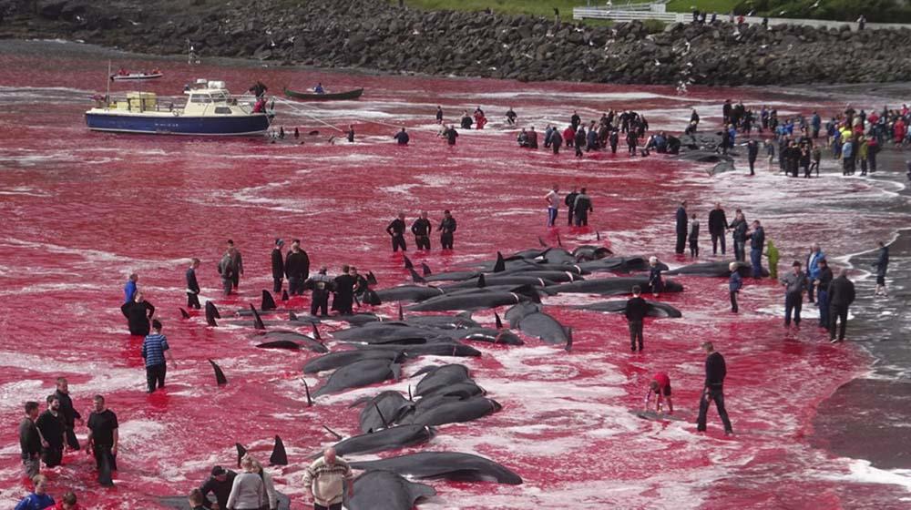 """Horror en las Islas Feroe: """"Masacre sin precedentes"""""""